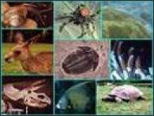 20% din mamiferele lumii sunt pe cale de disparitie