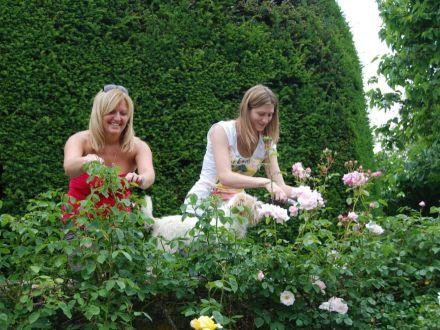 6 sfaturi despre cum sa tunzi corect trandafirii toamna