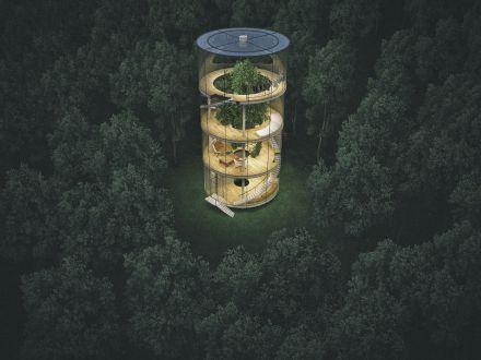 Copacul din interiorul casei! Un proiect inedit