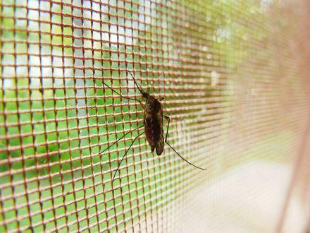 Cum sa scapi de insectele sacaitoare de pe terasa casei
