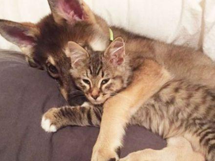 Un catel si o pisica, cei mai buni prieteni! Afla-le povestea emotionanta!