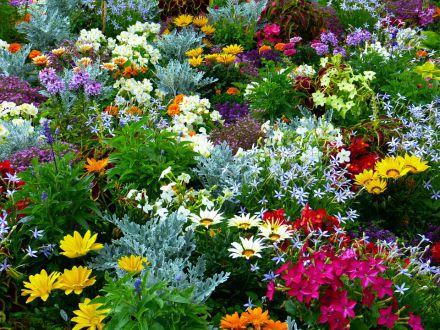 Top 7 plante pe care orice gradinar trebuie sa le aiba in gradina