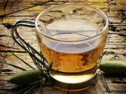 7 proprietati ale ceaiului din muguri de pin. Iata de ce este bine sa il bei toata iarna!