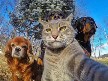 Animalele, cuprinse de febra selfie-urilor! Cele mai amuzante poze