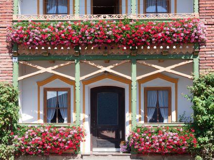 Muscatele, cele mai frumoase flori de balcon! 3 trucuri de care sa tii cont in ingrijrea acestora