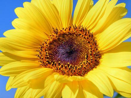 Florile lunii august! Cum sa le ingrijesti corect
