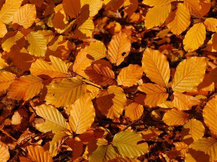 Compost din frunze de toamna, un rasfat pentru gradina ta