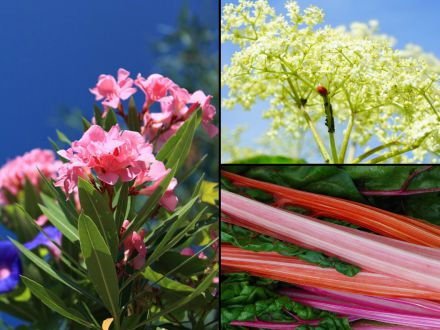 5 plante de care este bine sa te feresti! Sunt extrem de periculoase