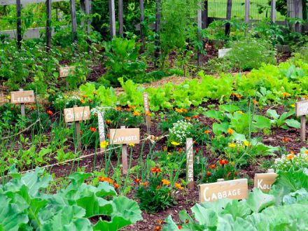 Mic ghid de gradinarit: ce legume poti planta in gradina in luna mai