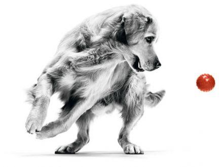 Dog Walk – un eveniment marca Royal Canin care sustine constientizarea obezitatii in randul animalelor de companie