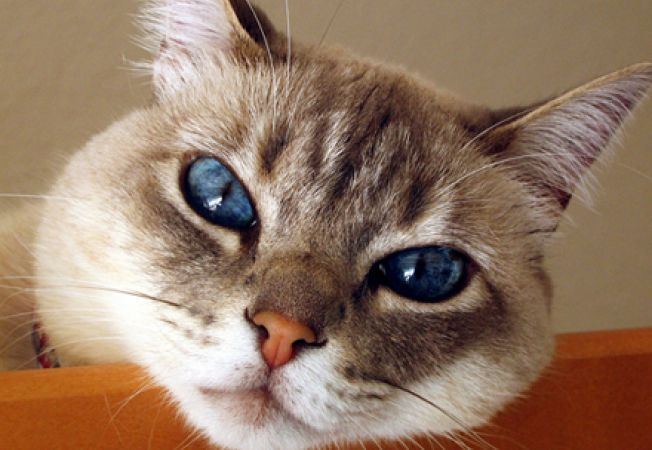 pisica trista