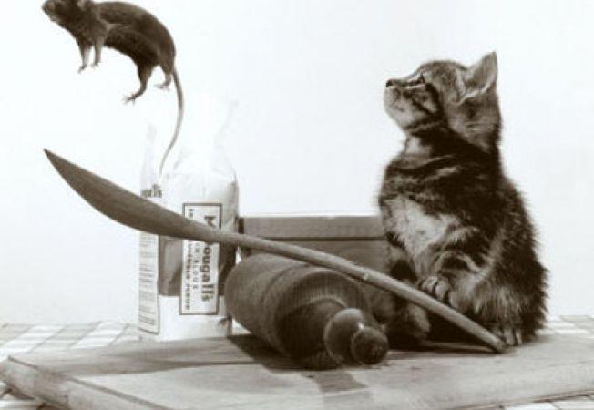 pisica 9.0