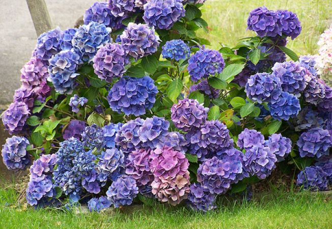 Купить букет цветов с доставкой на дом на заказ недорого в