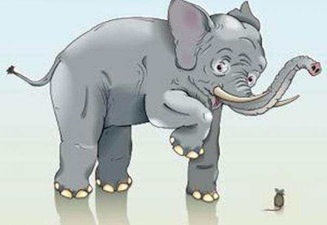 elefant speriat de soarece