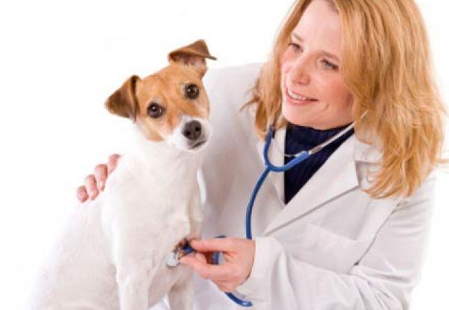 caine la veterinar