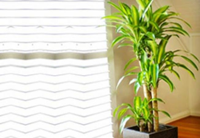 Plante semnificative in feng shui for Plante feng shui