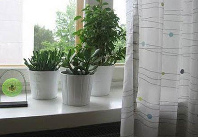 plante calorifer