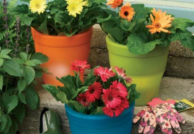 Ghivece flori ieftine