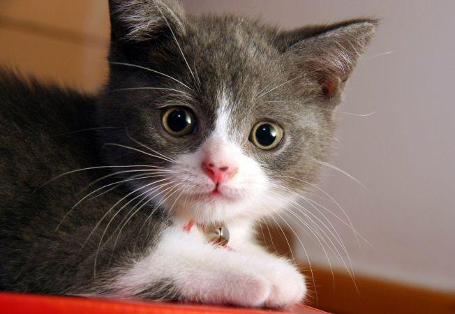 mustati pisici