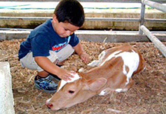 copil cu vitel