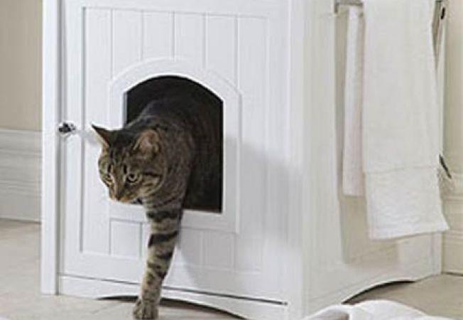 Tine cainele departe de litiera pisicii