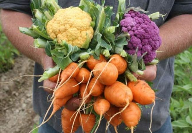Vezi cum influenteaza canicula dezvoltarea legumelor tale
