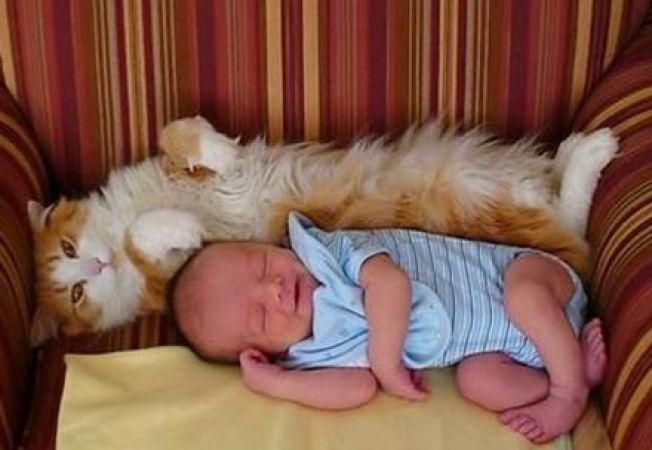 Pisicile ii feresc pe copii de alergii