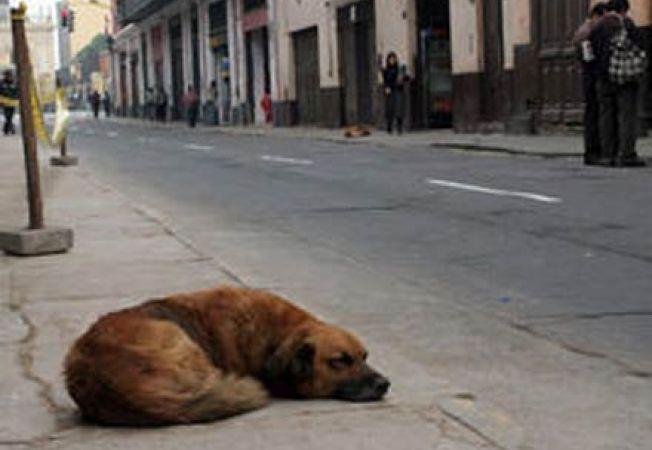 Problema exterminarii cainilor vagabonzi din Romania, expusa presa din Italia