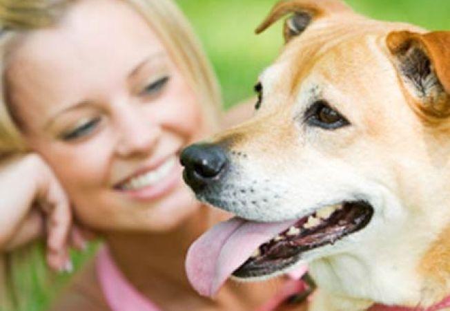Ce boli ne pot transmite animalutele