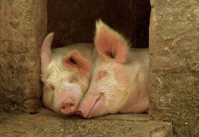 Comportamente ciudate de reproducere ale animalutelor