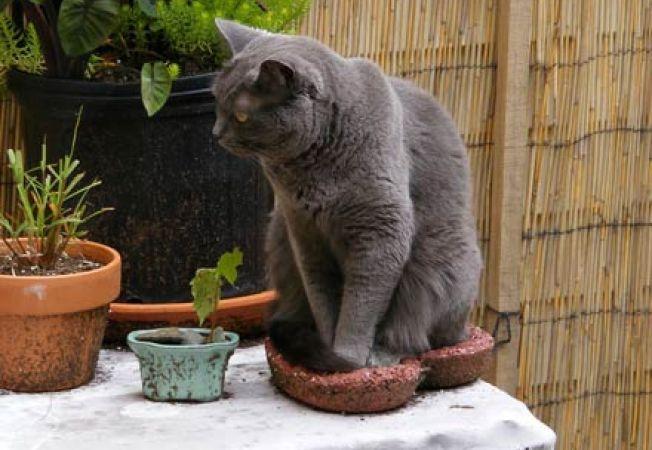 6 plante benefice pentru pisica ta