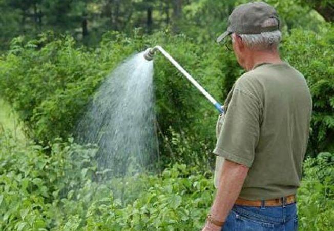 Tratamente fitosanitare pentru plantele din gradina ta