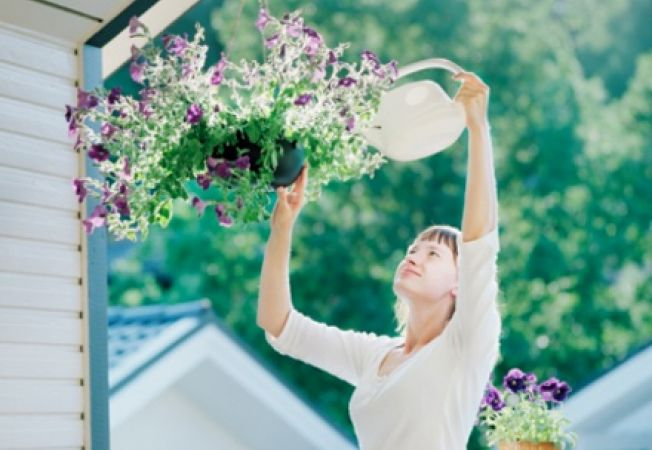 Cum sa ingrijesti plantele curgatoare