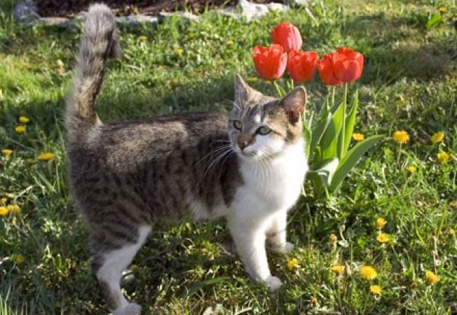 Pisicile isi fac nevoile in gradina vecinului in mod intentionat