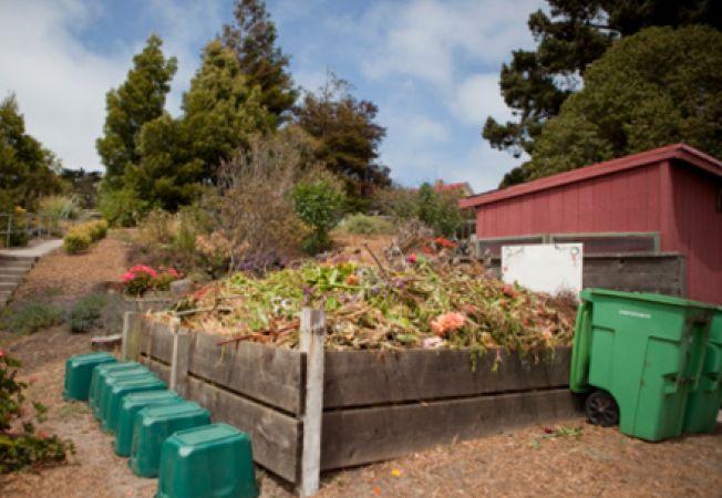 Tot ce trebuie sa stii despre compostul organic