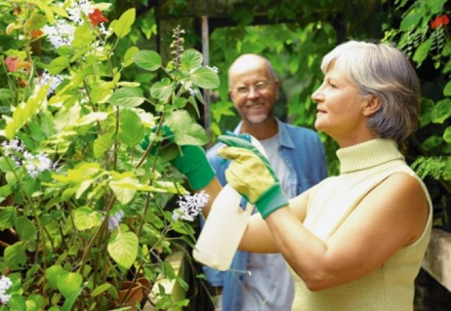 Cum sa aplici pesticidele organice