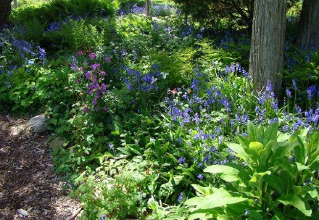 Gradina cu flori salbatice, un pas mai aproape de natura