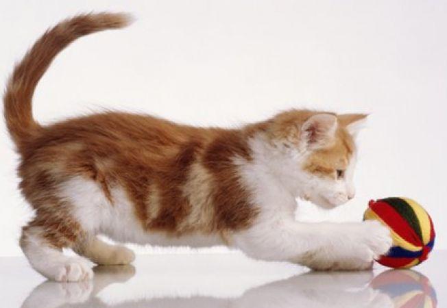 Alege jucarii sigure pentru pisica ta