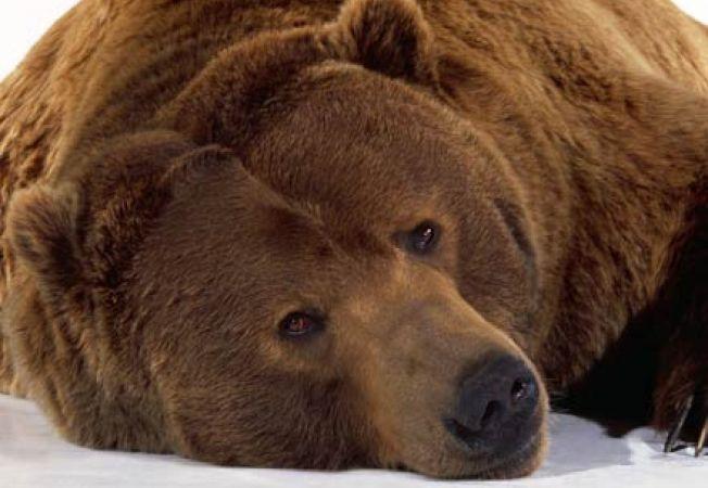 Specii de animalele puse in pericol in Romania