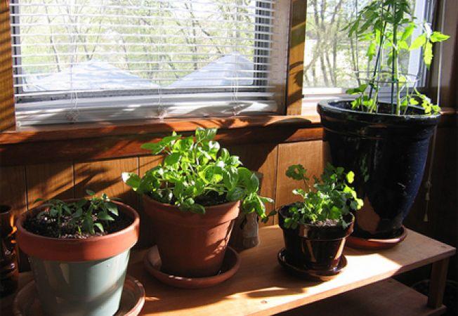 Cum sa cresti plante aromatice pe pervaz
