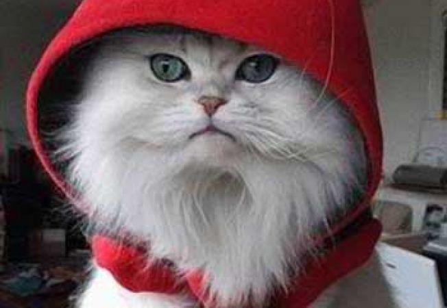 Cum e mai bine: sa adopti sau sa cumperi o pisica?