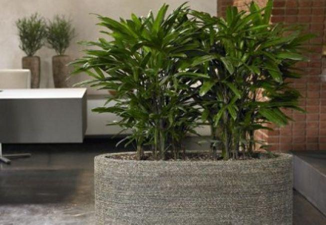 6 plante care purifica aerul din casa