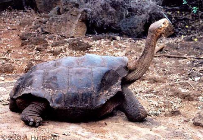 10 specii de animale pe cale de disparitie - partea I