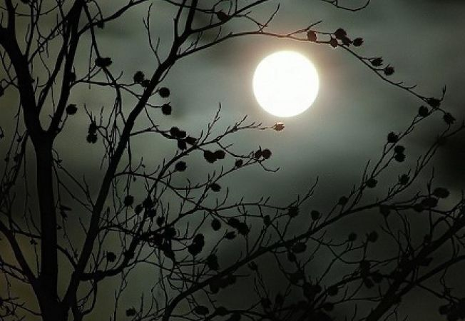 Influenta ciclurilor lunare in gradina