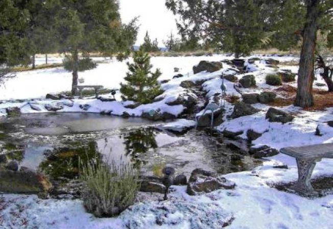 Cum ingrijesti iazul din gradina in sezonul rece