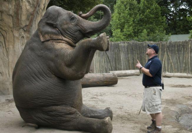 Sunt gradinile zoologice un loc potrivit pentru animale?