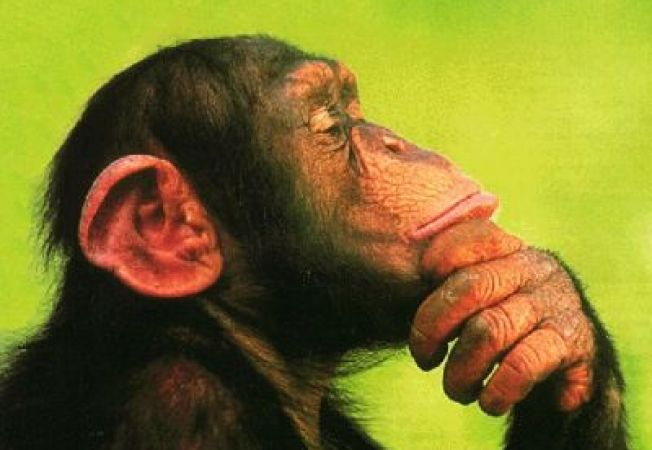 Pot animalele sa vorbeasca?