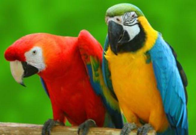Ce te faci cu un papagal care injura?