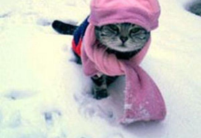 Cat pot sa tin pisica afara cand e frig?