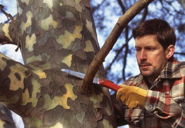 Cum tai o creanga mare dintr-un copac